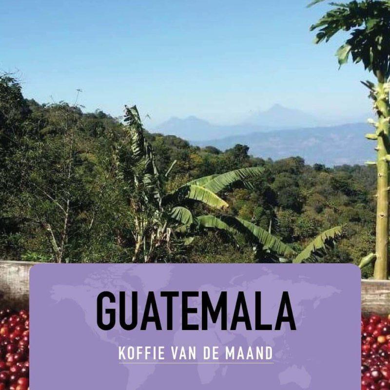 Koffie van de maand Februari Guatemala primavera