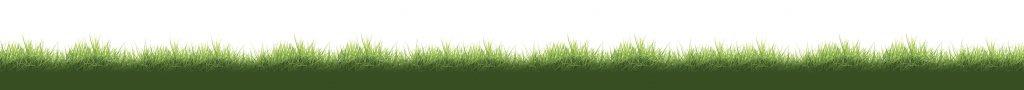Hollebeekhoeve gras