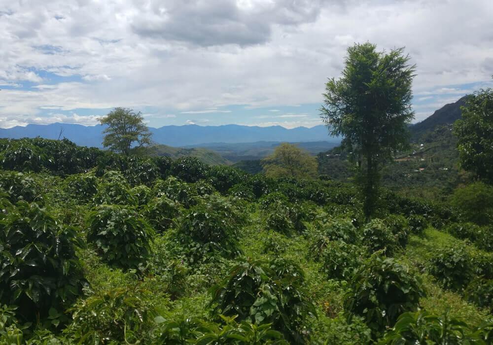 Colombia El Para - Omgeving